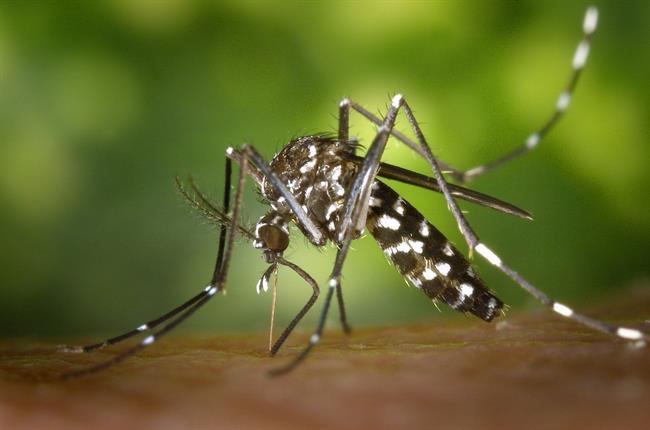 Izdelki za zaščito pred komarji: Delujejo ali ne?