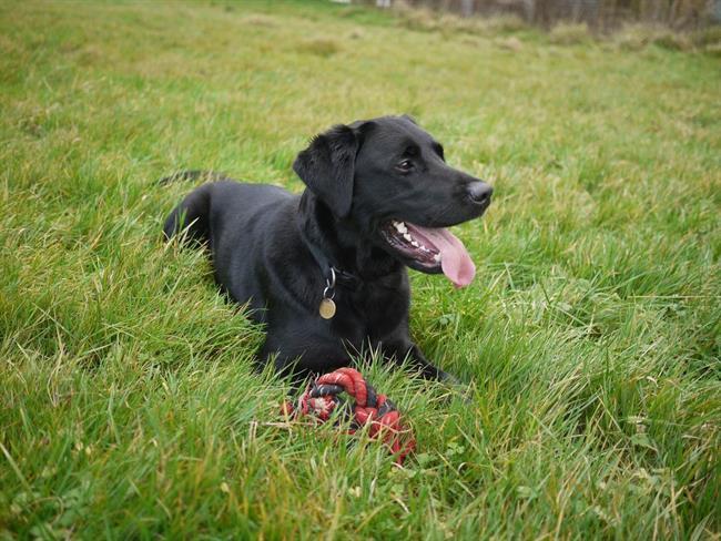 FOTO: Prepoznate neznanca, ki je danes v okolici Maribora odvrgel psa?