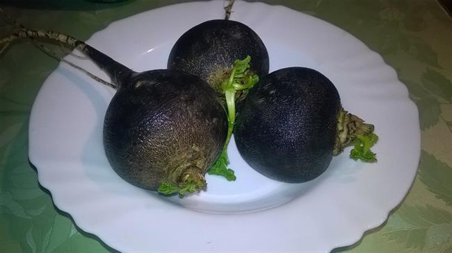 Iz Jožičine kuhinje: Zdravilni učinki črne redkve